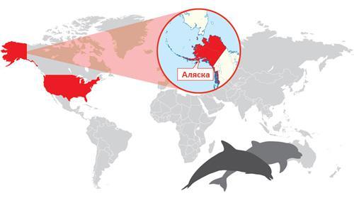Защита мест обитания китов-белух на Аляске с использованием гибкой платформы датчиков Libelium