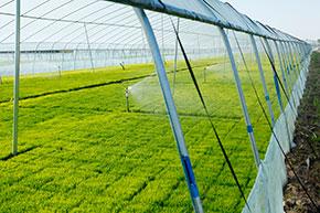 Проект в области интеллектуального сельского хозяйства в Салерно: мониторинг производства «бэби-салата» четвертого поколения на сельскохозяйственном предприятии как способ  эффективного использования удобрений и орошения