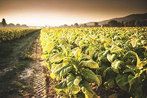 Самые востребованные функции IoT-технологий Smart Agriculture — в новом кратком отчете Libelium