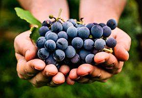 Компания EFOR и банк Ibercaja реализовали на базе оборудования Libelium и платформы Microsoft Azure новый проект в области виноделия Agrotech